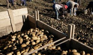 Corporate News (Pakistan News) Potato Export