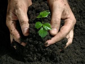 fertilizer1